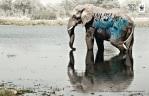biodiversity-and-biosafety-awareness-elephant