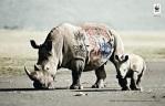 biodiversity-and-biosafety-awareness-rhinoceros