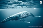 biodiversity-and-biosafety-awareness-whale