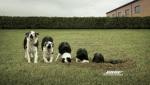 noise-cancelling-headphones-noisy-dog